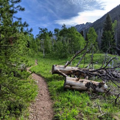 Pitkin_Lake_Trail_Fallen_Trees